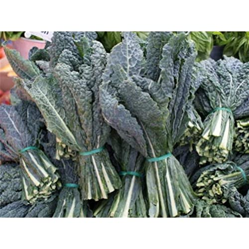 Cheap Kale Seed Assortment- Red Kale (500 Seeds), Black Kale (400), and Siberian Kale (500) for cheap 4Zl090H7