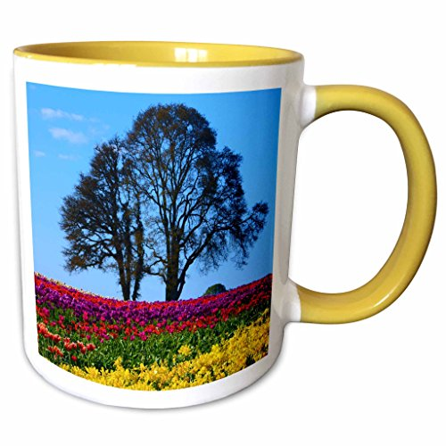 3dRose Danita Delimont - Michel Hersen - Flowers - Tulip Festival in Woodburn, Oregon, USA - 11oz Two-Tone Yellow Mug - Oregon Woodburn Outlet