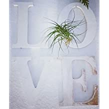 The Green Door Design Wooden Hanging Letters With Air Plant
