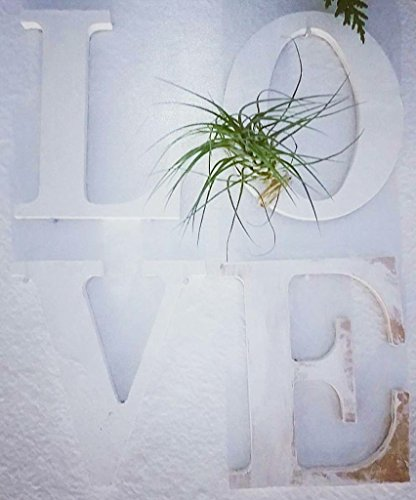 the-green-door-design-wooden-hanging-letters-with-air-plant