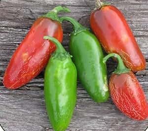 50 USDA Organic Early Jalapeno Hot Pepper Seeds Capsicum annum MOFGA