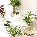 Mkono 2 Pack Wall Hanging Plant Terrarium Glass Planter--Hexagon Shape