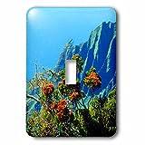 3dRose lsp_207568_1 Usa, Hawaii, Kauai. A Flowering Tree Above The Na Pali Coast. - Single Toggle Switch