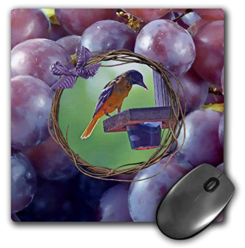 3dRose Beverly Turner Bird Photography - Baltimore Oriole at Feeder, Twig and Grape Frame with Bow, Purple - Mousepad ()