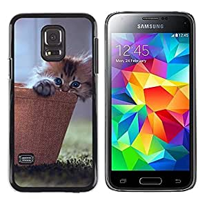 ROKK CASES / Samsung Galaxy S5 Mini, SM-G800, NOT S5 REGULAR! / CUTE KITTY CAT BASKET / Delgado Negro Plástico caso cubierta Shell Armor Funda Case Cover