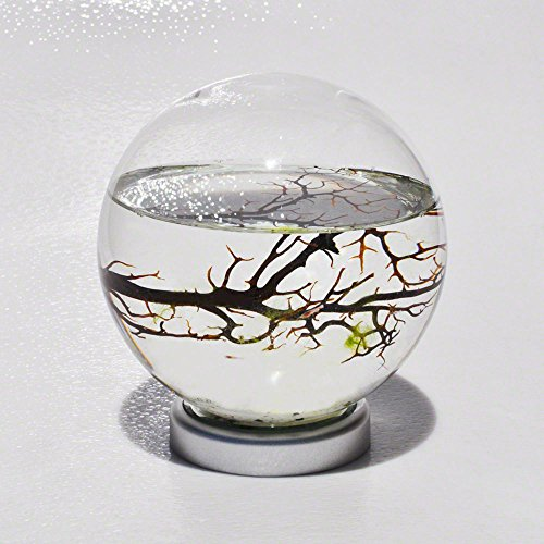 EcoSphere Closed Aquatic Ecosystem, Large Sphere with LED Base