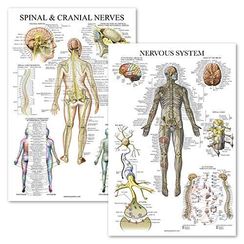 [해외]2 Pack - Spinal Nerves & Nervous System Anatomy Posters - Set of 2 Anatomical Charts - SpineNervous - Laminated 18 x 27 / 2 Pack - Spinal Nerves & Nervous System Anatomy Posters - Set of 2 Anatomical Charts - SpineNervous - Laminat...