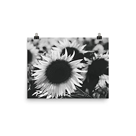 Minimalist sunflower poster print wall art 11x14 inches black white photography modern home