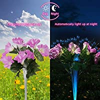 2 Pack Dapai LED Decorative Solar Flowers Stake Lights for Garden (Pink & Purple)