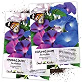 Seed Needs, Tall Mix Morning Glory (Ipomoea purpurea) Twin Pack of 100 Seeds Each Untreated