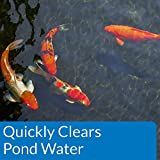 API POND ACCU-CLEAR Pond Water Clarifier 32-Ounce