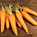 Carrot Kuroda F1 Seeds - Vegetable Seeds Package
