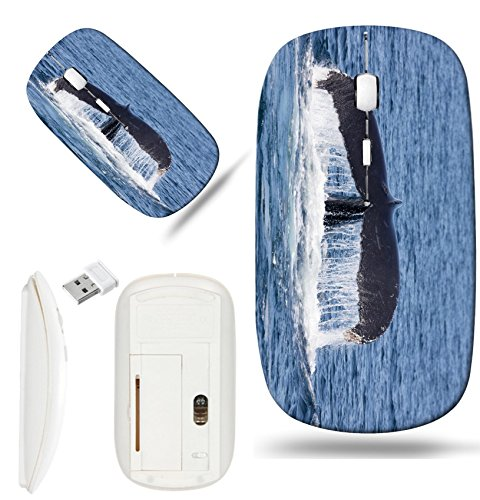 Luxlady Wireless Mouse White Base Travel 2.4G Wireless Mice with USB Receiver, 1000 DPI for notebook, pc, laptop, mac design IMAGE ID: 45075561 Whale in Provincetown Cape Cod Massachussetts United Sta Provincetown Cape Cod