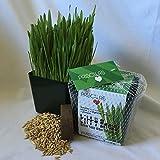 Priscilla's Kitty Cat Grass Kit - Grow Your Own Grass