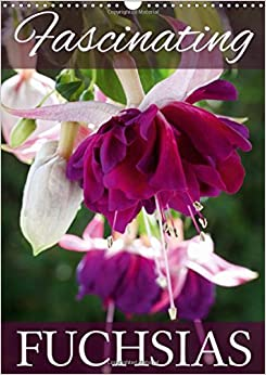 Fascinating Fuchsias 2017: Discover the Beauty of Fuchsias (Calvendo Nature)