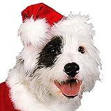 Rubies Christmas Pet Costume, Santa Claus, Large