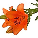 Farm Fresh Natural Orange LA Hybrid Lilies - 40 Stems