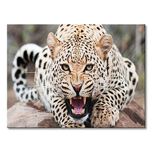 cheetah picture frame - 5
