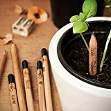 10packs/lot Lovely Sprouting Pencils with Plant Seeds Wooden Indoor DIY Mini Bonsai for Student Gift Black HB Pencil Bonsai