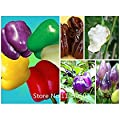 Promotion Colorful Sweet Pepper Seeds, Yellow Purple Red Green White orange black Mix Sweet Bell Pepper Seeds - 200 vegetable se