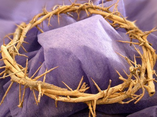 Passion of Christ Crown of Thorns/ Authentic Crown of Thorns Comes in Gift Box with Description by Holy Land Imports