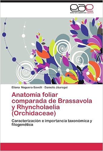 Anatomía foliar comparada de Brassavola y Rhyncholaelia (Orchidaceae ...