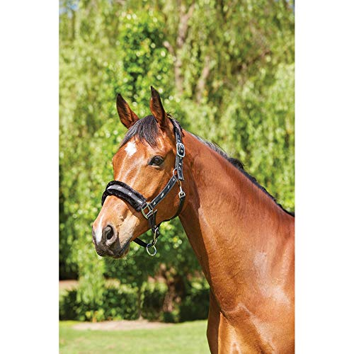 Bestselling Horse Halters
