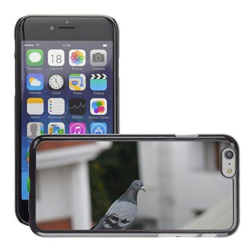 "Bild Hart Handy Schwarz Schutz Case Cover Schale Etui // M00133824 Vogel Pigeon Dove // Apple iPhone 6 PLUS 5.5"""