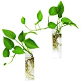 Ivolador Wall Hanging Glass Propagation Plant Terrarium Container Rectangle Shape Perfect for Propagating Hydroponic Plants H
