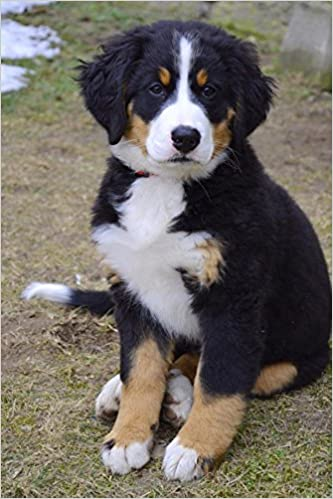 Burmese Mountain Dog Puppy Journal 150 Page Lined Notebook