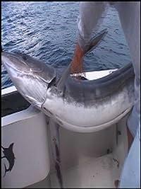 Sport Fishing With Dan Hernandez Episode 430