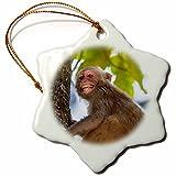 3dRose Danita Delimont - Primates - India. Rhesus macaque, Macaca mulatta, at Bandhavgarh Tiger Reserve. - 3 inch Snowflake Porcelain Ornament (orn_276805_1)
