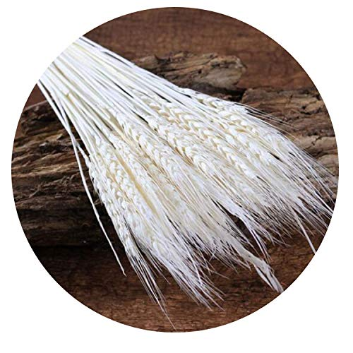 50Pcs/lot Natural Dried Flower Wheat Ears Bouquet for