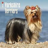 Yorkshire Terriers - 2017 Calendar 12 x 12in