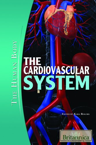 The Cardiovascular System  The Human Body