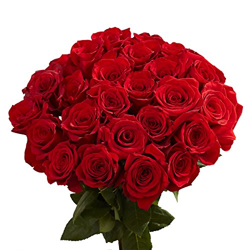 GlobalRose 50 Red Roses- Sweet Fresh Cut Flowers- Vibrant Color Blooms ()