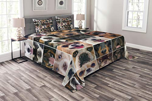 Lunarable Dog Lover Bedspread Set King Size, Dogs in Studio Chihuahua Chow Chow Cocker Spaniel Poodle Purebred Sheepdog Print, Decorative Quilted 3 Piece Coverlet Set with 2 Pillow Shams, Black Beige