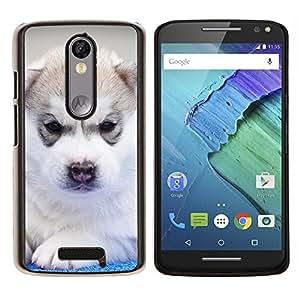 Siberian Husky de Alaska Malamute Cachorro- Metal de aluminio y de plástico duro Caja del teléfono - Negro - Motorola Droid Turbo 2 / Moto X Force