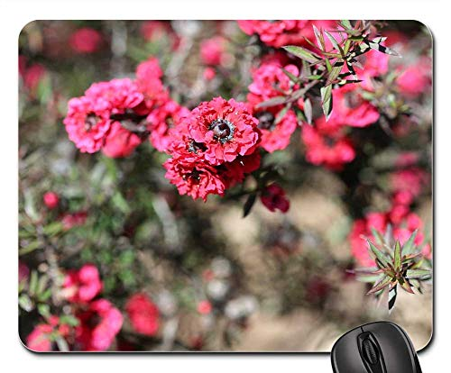 - Mouse Pad - Pink Pearl Manuka Tea Tree Leptospermum Scoparium
