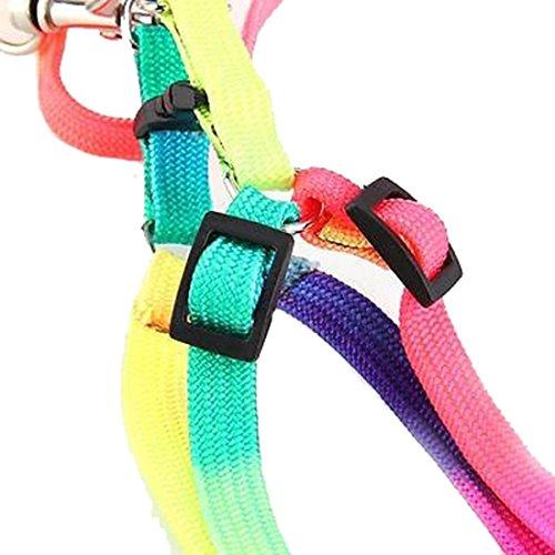 ASTrade Harnais réglable en nylon durable pour petit chien chat Arc-en-ciel couleur aléatoire