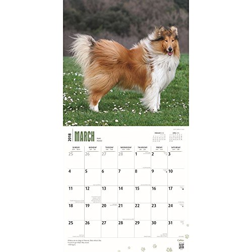 Collies 2018 Wall Calendar Photo #2
