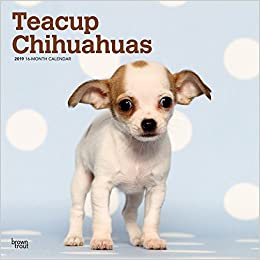 Teacup Chihuahuas 2019 12 x 12 Inch Monthly Square Wall