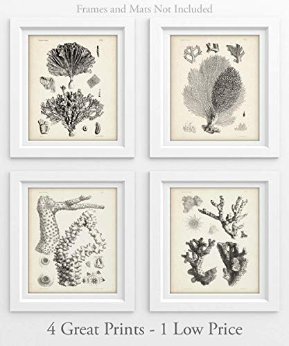 Coral - Set of 4-11x14 Unframed Art Prints - Makes a Great Beach House Decor Under $25