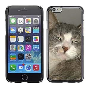 "Just Phone Cases Etui Housse Coque de Protection Cover Rigide pour // M00129083 Gato DomesticCat Animal Gris Blanco // Apple iPhone 6 PLUS 5.5"""