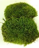 Glass Home Gardens Best Deals - Fresh Mood Moss Perfect for Terrariums and Bonsai
