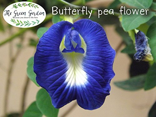 100% Organic Dried Pure Butterfly Pea Flowers 1.60 Oz. (50 g.) Herbals Blue Tea, All Natural Ingredients, Nontoxic, GMO-Free, Safe and Healthy in Zipper Packaging and Get Free a Wooden Spoon by FBA by The Green Garden (Image #2)