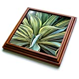 3dRose Taiche - Acrylic Painting - Agave - Tropical Agave  - 8x8 Trivet with 6x6 ceramic tile