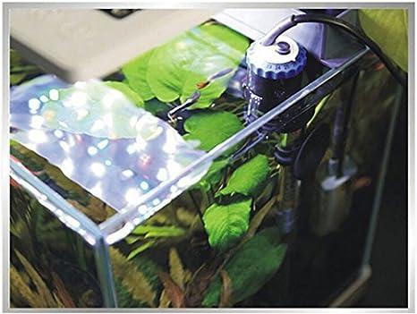 Nicepets - Calentador sumergible de 200W para tanque, acuario y pecera de agua fría con peces Guppy Betta Tetra incluye ventosa y enchufe UE 29 cm: ...