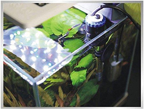 Nicepets - Calentador Sumergible de 500W para Tanques, acuarios y peceras de Agua fría o Caliente con Peces Guppy Betta Tetra Incluye Ventosa y Enchufe UE ...