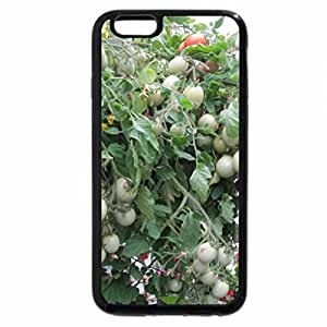 iPhone 6S Plus Case, iPhone 6 Plus Case, Tomatoes Hanging basket at greenhouse